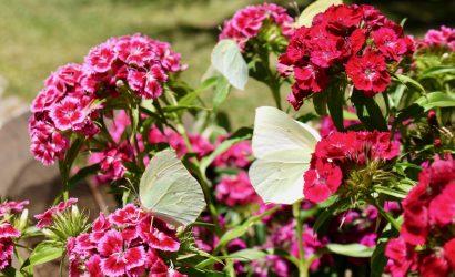 giardino-montano-linasia-wheresardinia